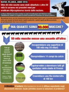 NUOVA ZELANDA_50 mila mucche