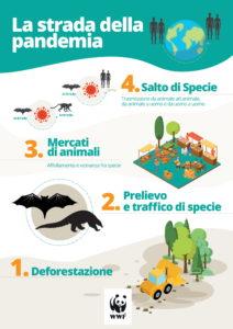 wwf_pandemia_infografica_1