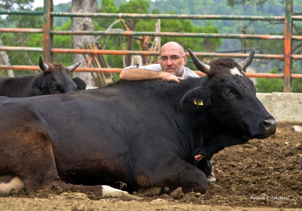 Marco e mucca nera